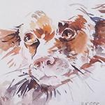 carre-chien